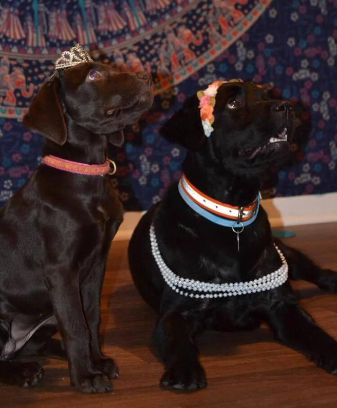 Finley (L) and Mattie (R)